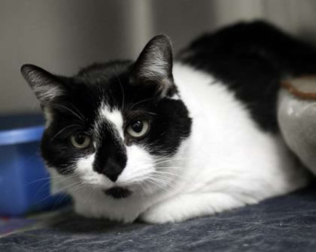 Tabbytha is waiting for a home of her own.