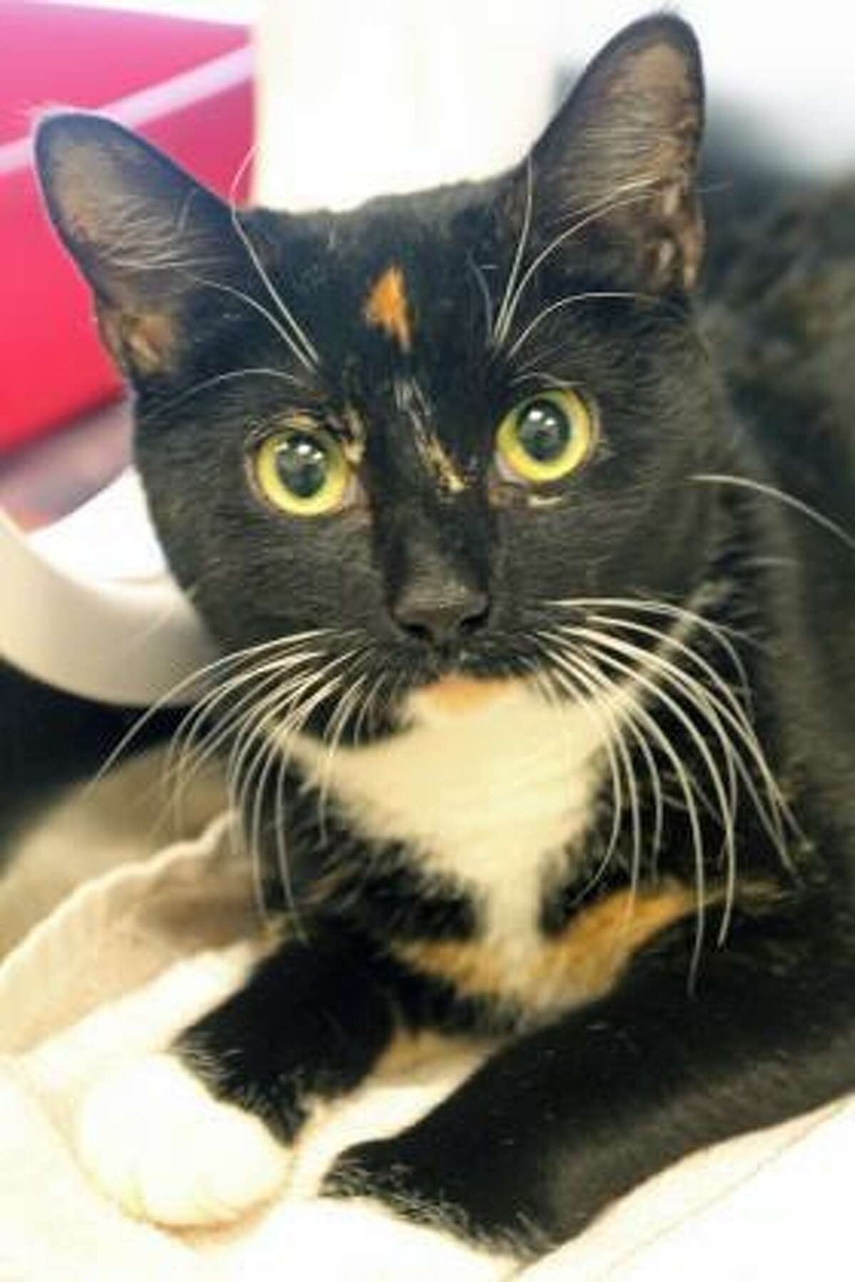 Penny Lane is waiting for a new home.