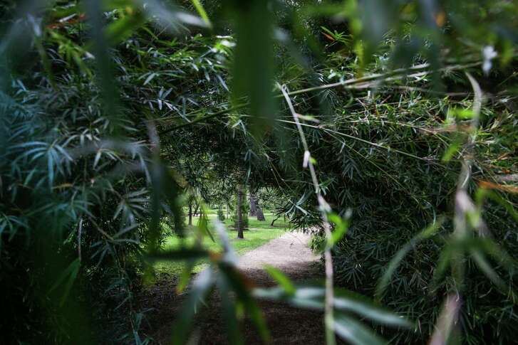 Bamboo lends an exotic feel to the Japanese Garden at Hermann Park.