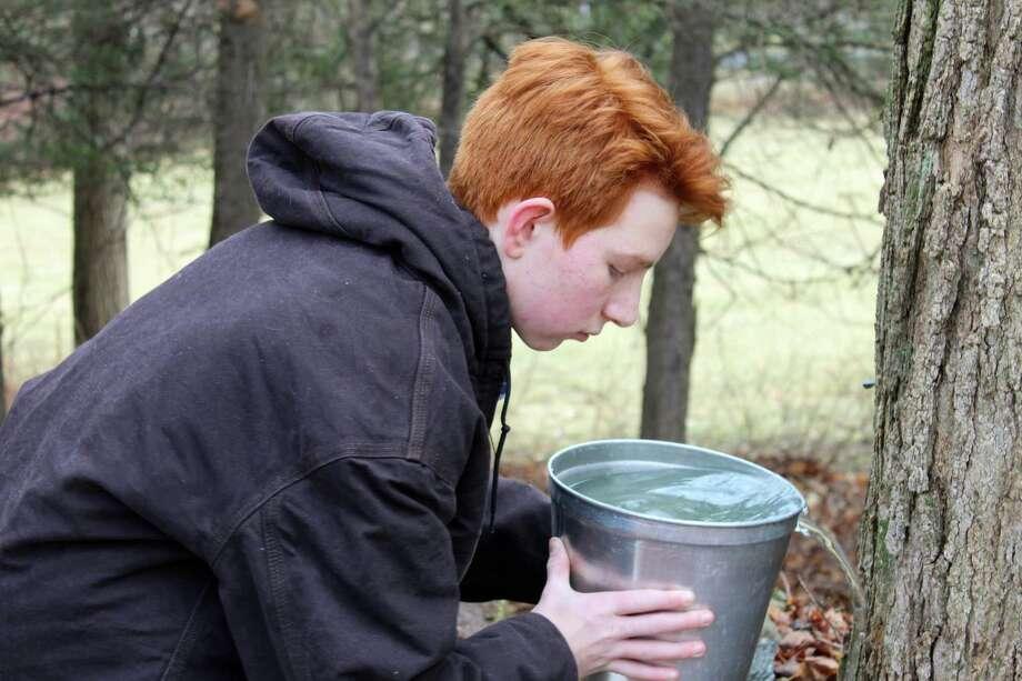 Ambler Farm's maple syrup program. Photo: Stephanie Kim / Hearst Connecticut Media