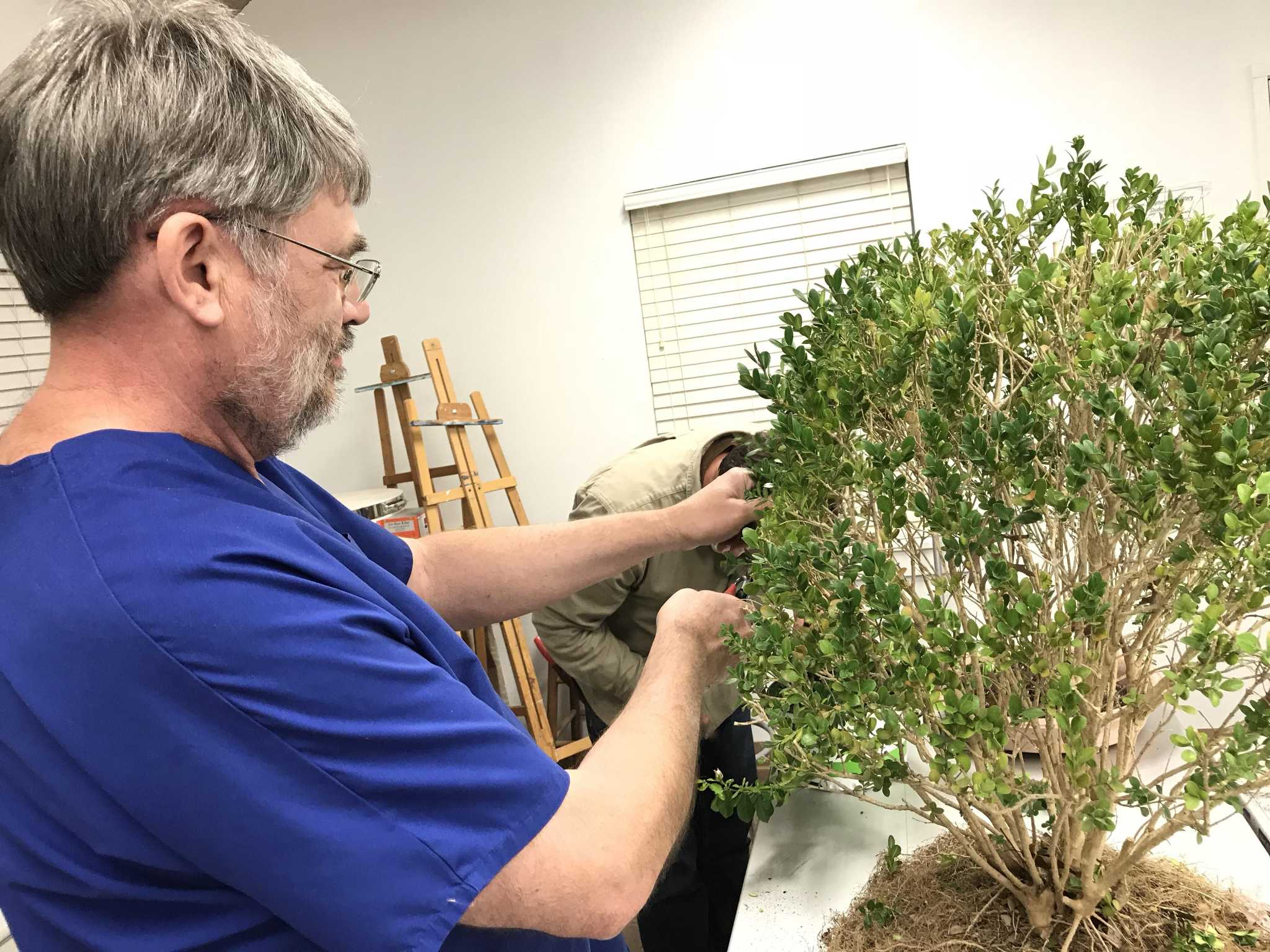Growing Tiny Trees With The San Antonio Bonsai Society