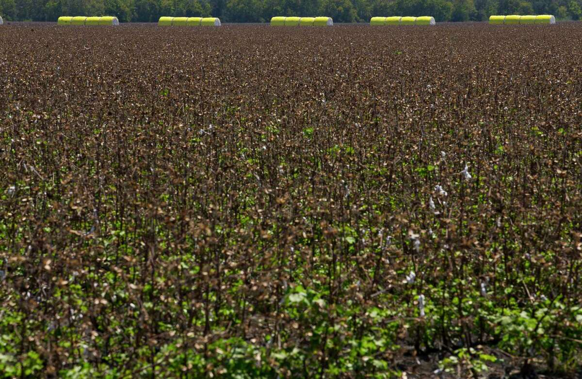 """U.S. Rep. Jodey Arrington says the removal of cotton from the price support program has had a """"devastating effect"""" on farmers."""