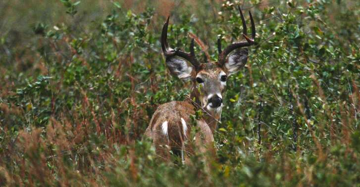 Hunters in Texas' North Deer Zone would see the general hunting season for white-tailed deer, the most popular game animal in the state, extended by two weeks under a proposal that would standardize the season's opening and closing dates to mirror those currently used in South Texas.