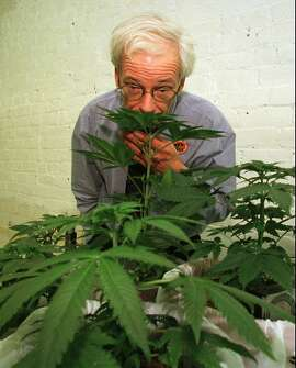 FILE--Dennis Peron, founder of the Cannabis Cultivators Club, sniffs a marijuana plant in his club's growing room in San Francisco, on Jan. 1, 1997. The combative leader of  San Francisco's largest medical marijuana club is set to challenge Attorney General Dan Lungren for governor in the Republican primary.  (AP Photo/Eric Risberg)
