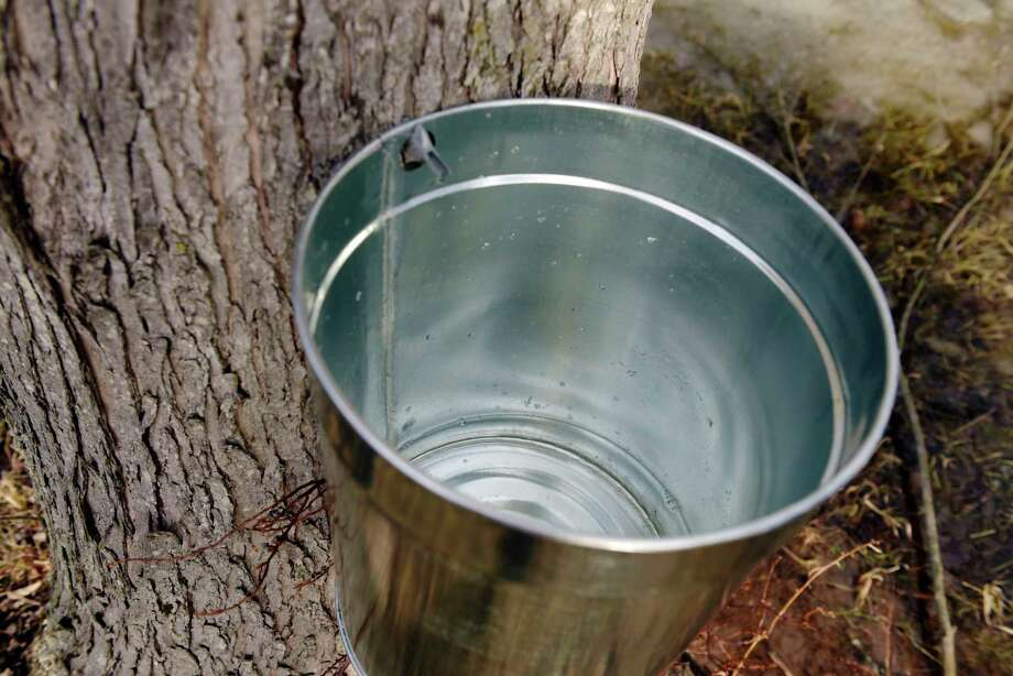 Sap drips out of a maple tree, seen here during the See How it Works Sunday event at Riverside Maple Farms on Sunday, Jan. 28, 2018, in Glenville, N.Y.  The maple farm in conjunction with Wolf Hollow Brewing Company, just down the road, held the event to give people a look at how the maple farm and the brewing house operate to produce their products.    (Paul Buckowski/Times Union) Photo: PAUL BUCKOWSKI / (Paul Buckowski/Times Union)