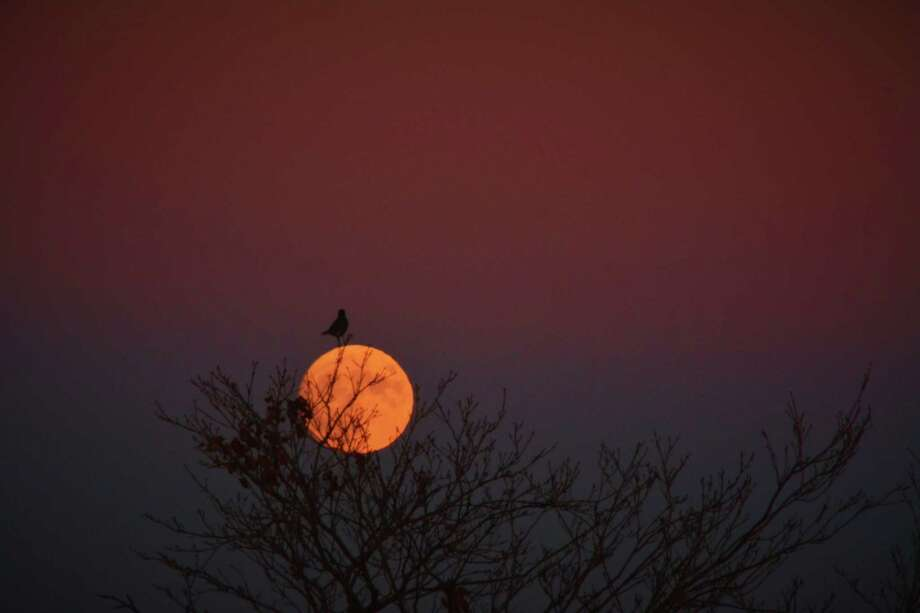 "Jim Halvorsen of Delmar took this photo, which he titled ""Lunar Bird,"" of the super moon at 4:45 p.m. Nov. 13, 2016, in New Scotland. (Jim Halvorsen photo)"
