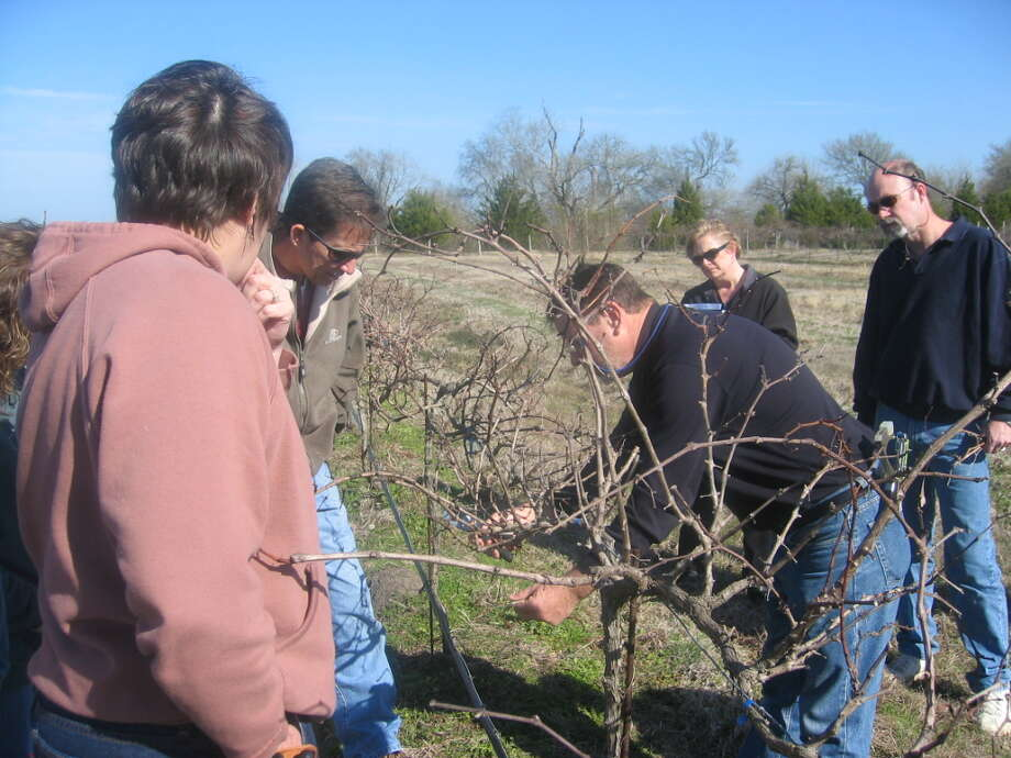 Jerry Bernhardt leads a wine seminar in the Bernhardt Vineyard with a group of vineyard seminar participants. The vines are completely leafless at this time which gives a sense of the array of vine canes.