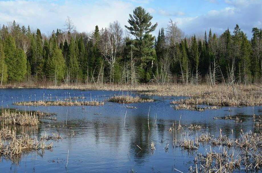 More than 50 percent of Michigan's wetlands, now recognized for their importance to wildlife, people, the environment and the economy - have been lost over the last two centuries. (Courtesy Photo)