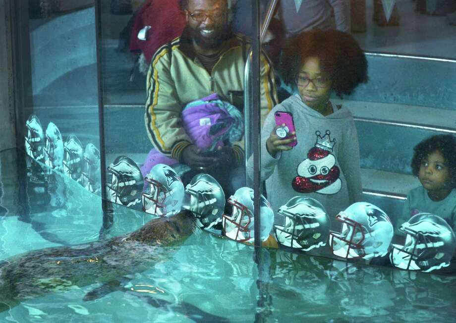 Lamont Hunter and his two daughters, Adanna, 10, and Amara, 4, watch as Orange the harbor seal makes her prediction for the winner of Super Bowl 52 at the Maritime Aquarium Wednesday, January 31, 2018, in Norwalk, Conn. Photo: Erik Trautmann / Hearst Connecticut Media / Norwalk Hour