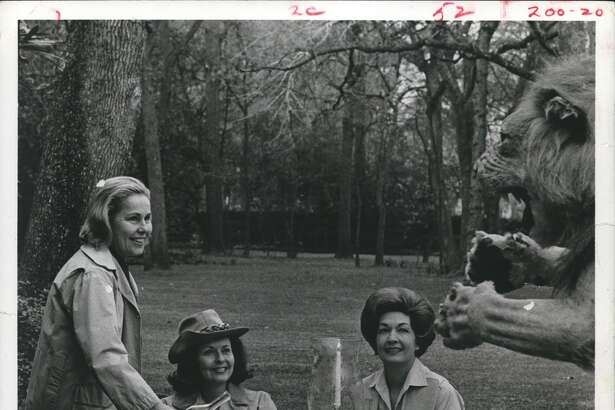 1968: The lion came to breakfast at Tiffany's or so they claim at the River Oaks Garden Club Forum of Civics, where a distinctly safari flavor will prevail during the Azalea Trail open house this year. From left, Mrs. Borden Tennant, Mrs. Frances Evans and Mrs. Lloyd Bentsen prepare for the jungle spirit on the John Mecom Jr. estate.