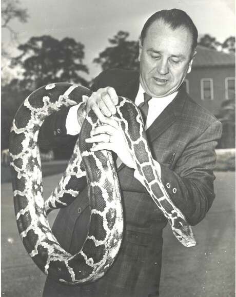 1970: The traveling python of River Oaks, a fugitive from the suitcase of Los Angeles Zoo curator Bill Turner, is clutched here by John Werler, curator of the Hermann Park Zoo.  Werler doesn't want the 9-foot snake - Turner had already tried to trade it to the Houston Zoo-- but he has agreed to keep it until his owner takes him home.  Police were dubious about taking it to headquarters when they discovered it wandering on Argonne St. on the edge of River Oaks.  The snake escaped the suitcase when a burglar robbed the car in which it was being transported.  Some burglar got a real surprise. Photo: Larry Evans/Houston Chronicle