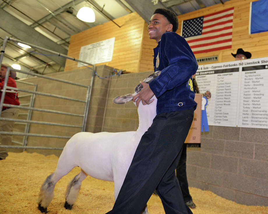 Cypress Falls High School sophomore Timothy Pace Jr. had the Grand Champion Lamb at the CFISD Livestock Show and Sale, which sold at auction to Joe Myers Ford for $12,500. Photo: N/a