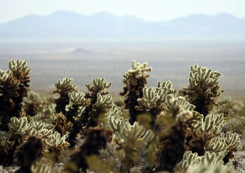 GALLERY: Gems of Joshua Tree National Park Known for its peculiar trees and presence in various pop culture mediums, Joshua Tree has become somewhat ubiquitous with the California-Coachella-desert aesthetic. It's a small park, and a highly trafficked one, but there's plenty of artistic endeavors and natural landmarks to discover off-the-beaten-path.