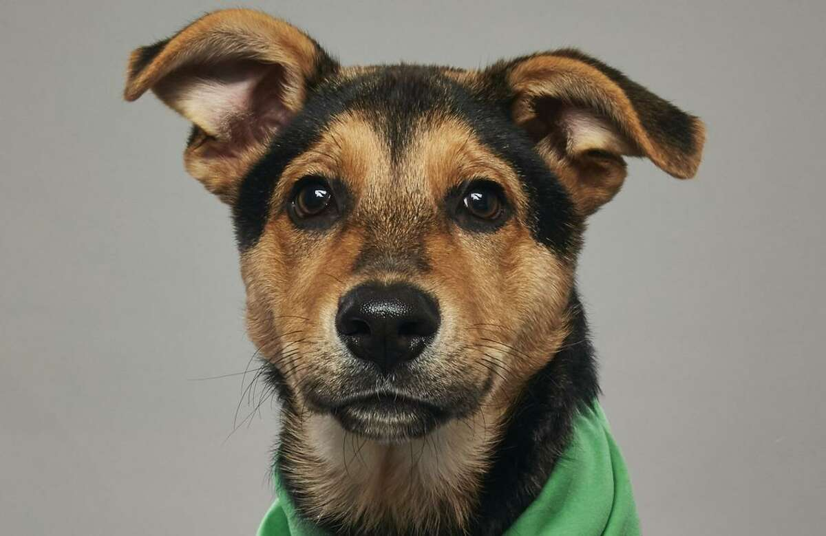 Edwin, a San Antonio rescue pup who will star in Puppy Bowl XIV at 2 p.m. Sunday on Animal Planet.