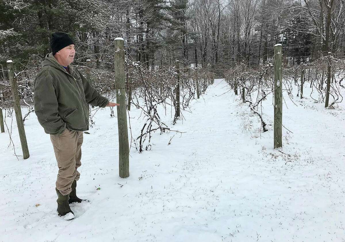 Mark Langford, business manager of DiGrazia Vineyards, stands at the edge of the winery's onsite vineyard in Brookfield, Conn., on Tuesday, Jan. 30, 2018. DeGrazia Vineyards is converting this area into an organic vineyard.