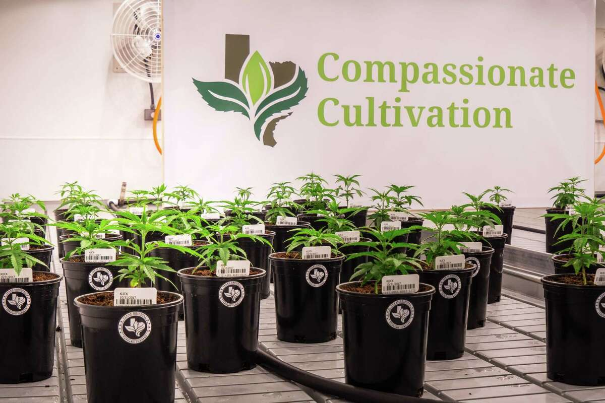 Compassionate Cultivation is one of the first medical marijuana dispensaries operating in Texas. The first orders of the medication will go through this month.