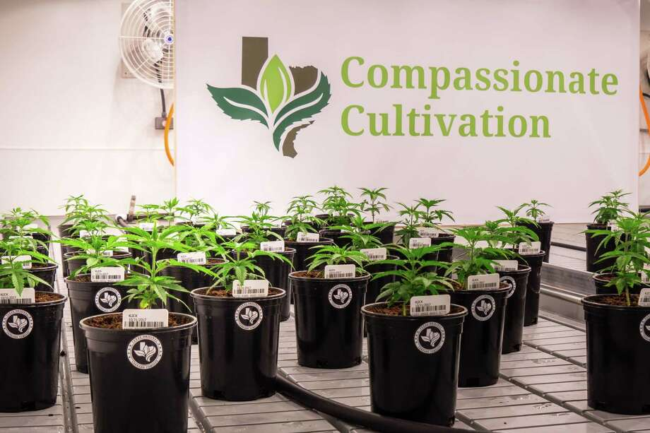 Compassionate Cultivation is one of the first medical marijuana dispensaries operating in Texas. The first orders of the medication will go through this month. Photo: Courtesy Of MaggieFitz Photography