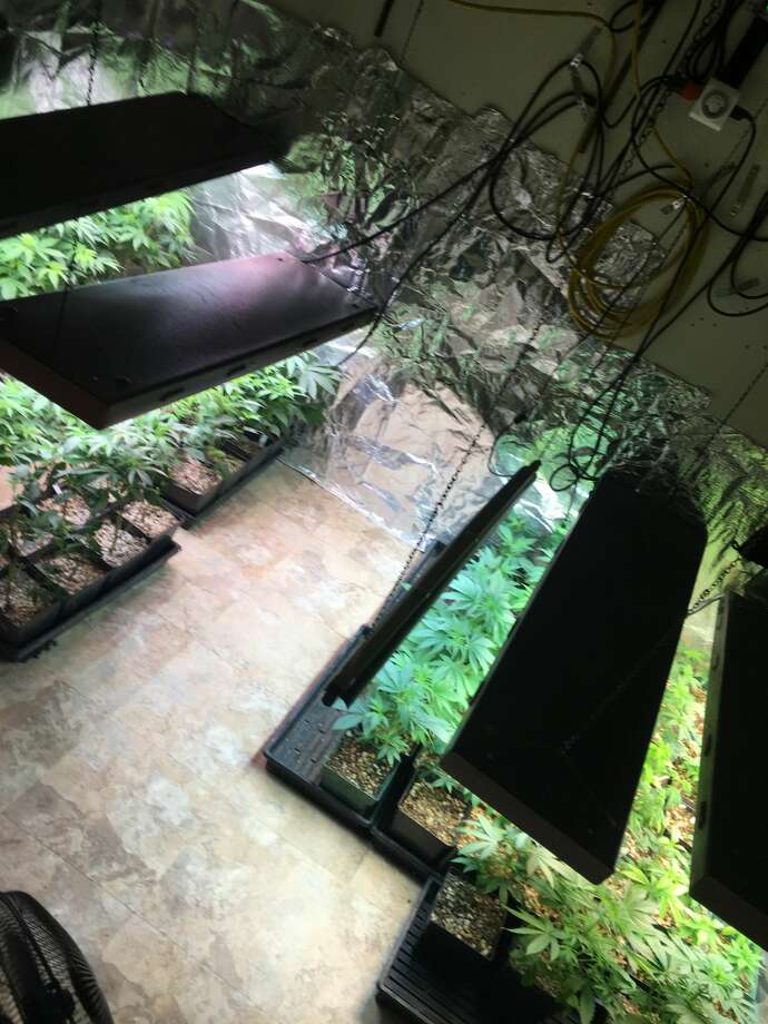 Hays County deputies discovered a suspected marijuana grow operation in the 11200 block of West Cave Boulevard. Photo: Hays County Sheriff's Office