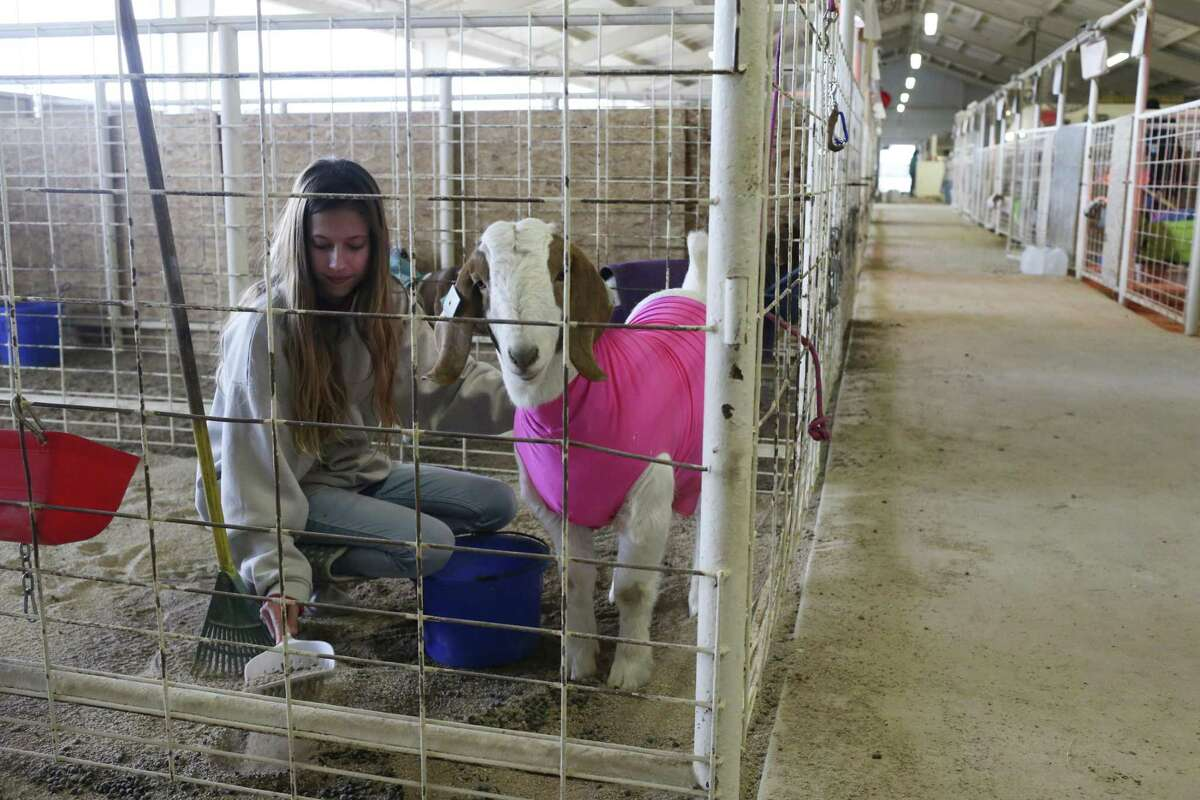 Kendra Garratt, 15, cleans her Boer goat's pen at the Vickery Project Center at Sandra Day O'Connor High School in Helotes, Jan. 18.