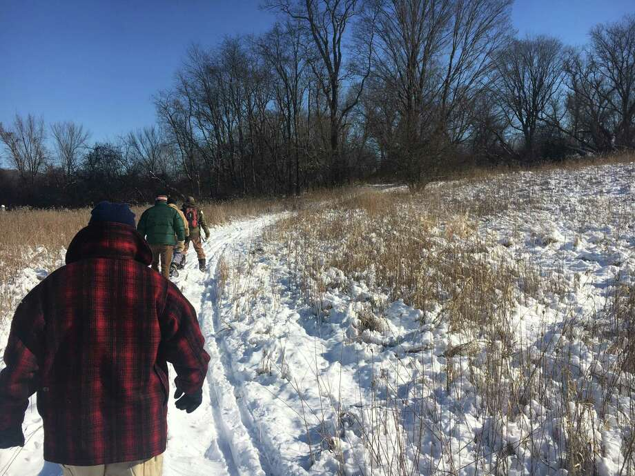 """A group of """"citizen scientists"""" assisted the Steep Rock Association with a pellet survey of the Macricostas Preserve in Washington, Conn. in search of New England cottontail rabbits. Photo: /"""