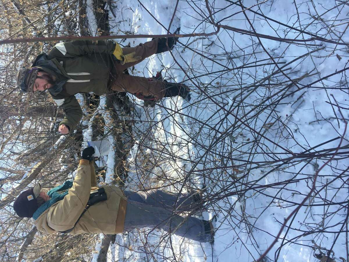 """Steep Rock Association Conservation and Program Leader Rory Larson passes rabbit droppings to """"citizen scientist"""" Alexis Barbalinardo, of Washington Depot, during a pellet survey of the Macricostas Preserve."""