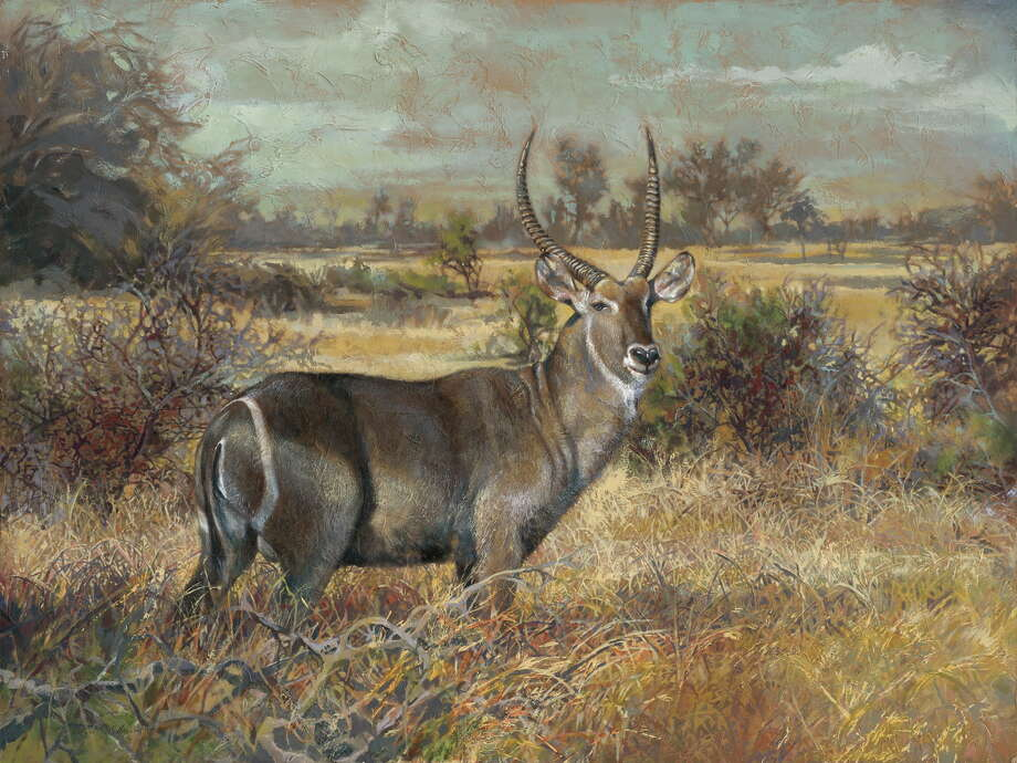 "A 36""x48"" acrylic painting by Vickie McMillan-Hayes titled ""Bullseye (Waterbuck),"" which is headed for exhibit at the new American Ambassador's residence in Djibouti. / Copyright (C) reserved"