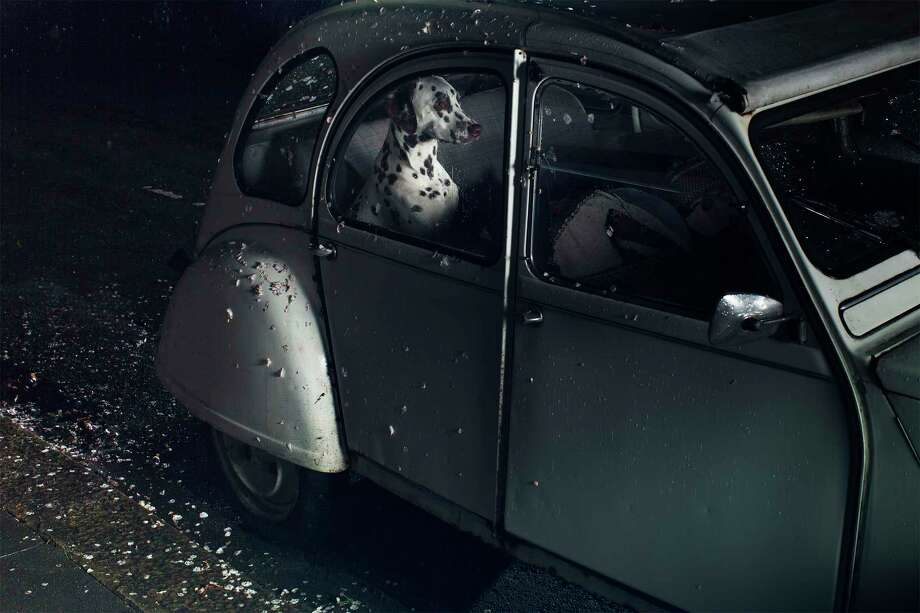 """""""Margaux,"""" from Martin Usborne's series """"The Silence of Dogs in Cars,"""" is among works in the HCP Print Auction Exhibition, on view through Sunday at Houston Center for Photography. Photo: Martin Usborne"""