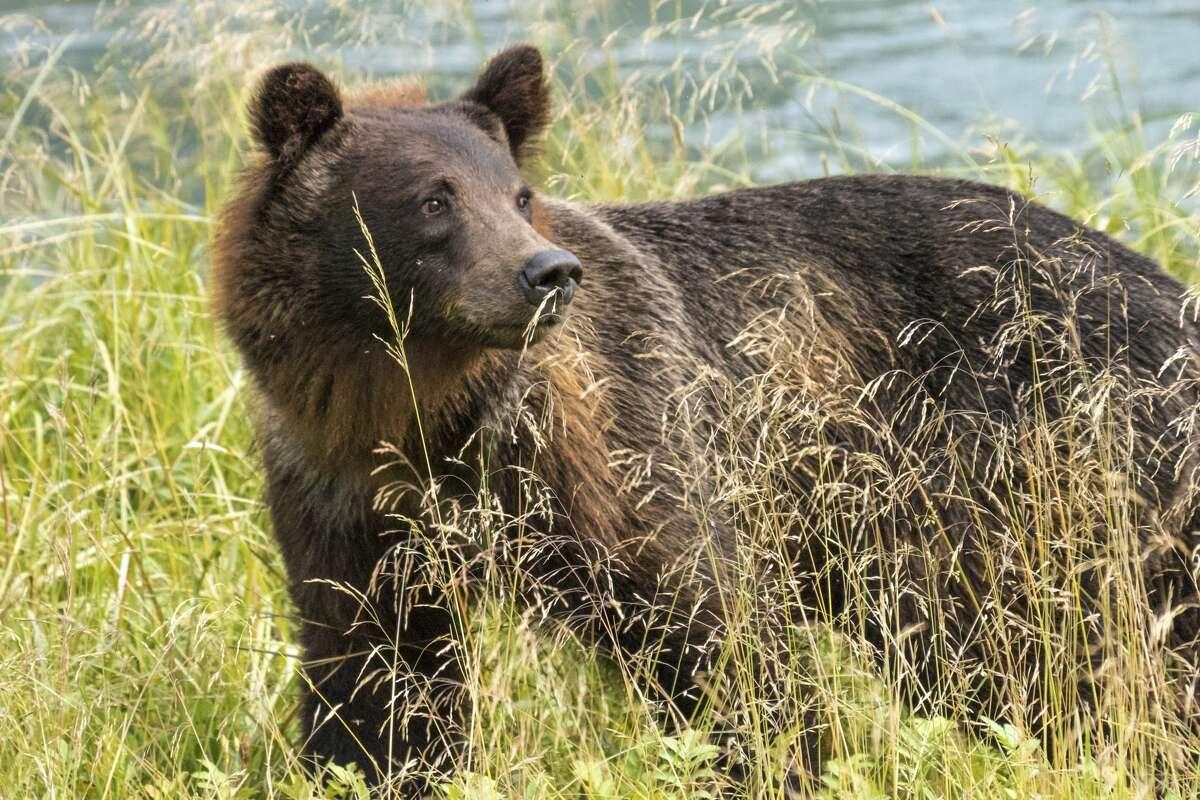 Silly bear: bears don't belong in Safeway.