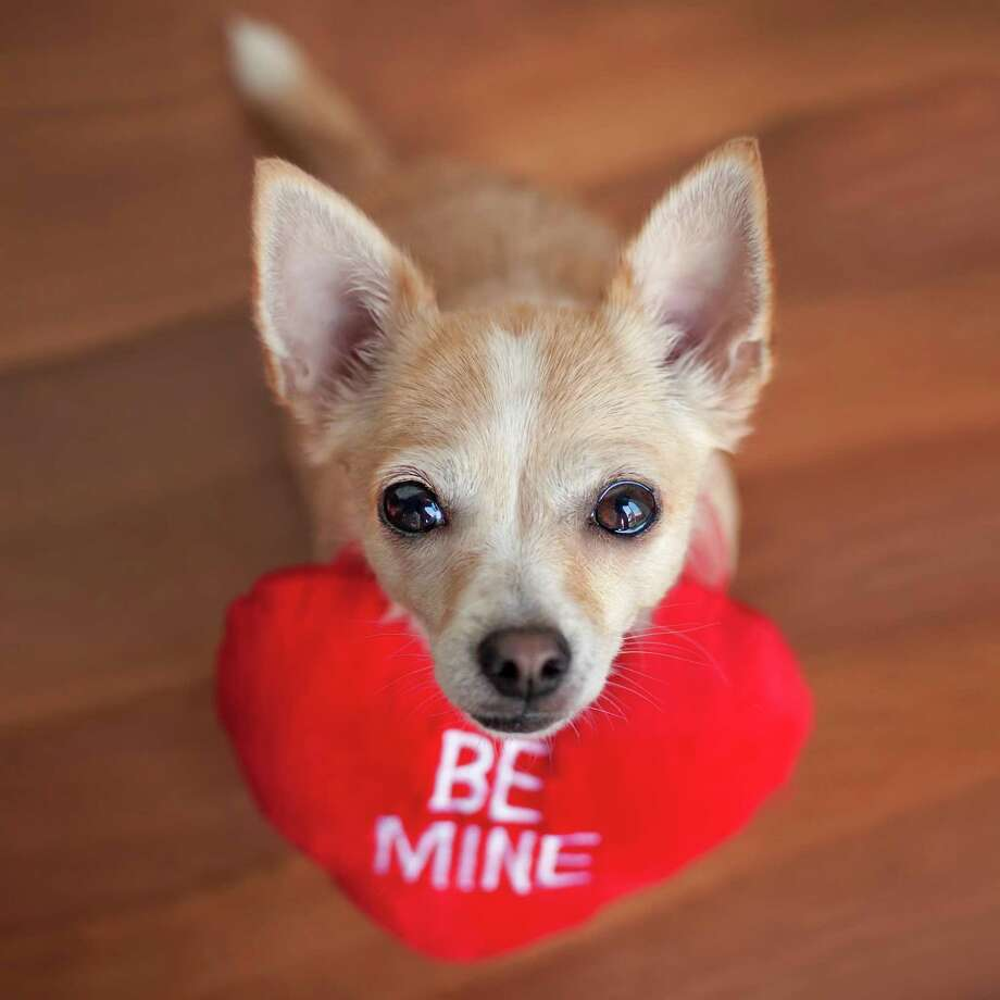 A Whole Lotta Love For Pets On Valentine's Day