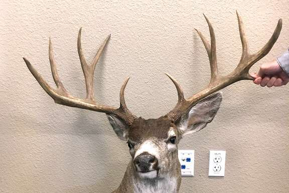 The poacher who illegally shot this giant black-tailed deer with huge antlers, rare for California, was ordered to pay $5,000 after a new law went into effect with special fines for illegally-taken deer with more than 3x3 antlers, along with elk, Sierra bighorn sheep, antelope and wild turkey.