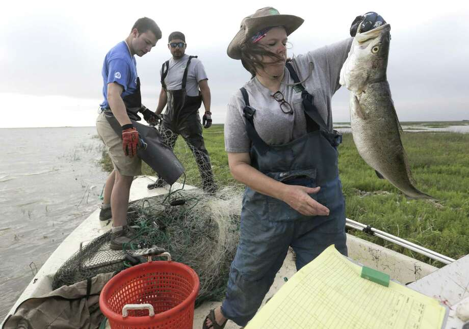 Wildlife researcher Leslie Hartman takes notes on fish collected in a gill net in Matagorda Bay on Tuesday, May 23, 2017. Photo: Elizabeth Conley /Houston Chronicle / © 2017 Houston Chronicle