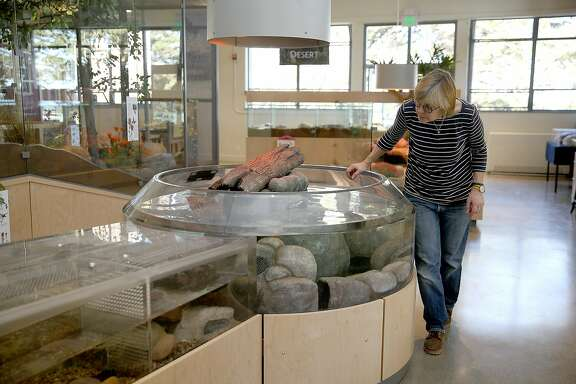 View of displays in the Wild in California animal exhibit at Randall Museum on Tuesday, February 6, 2018, in San Francisco, Ca.