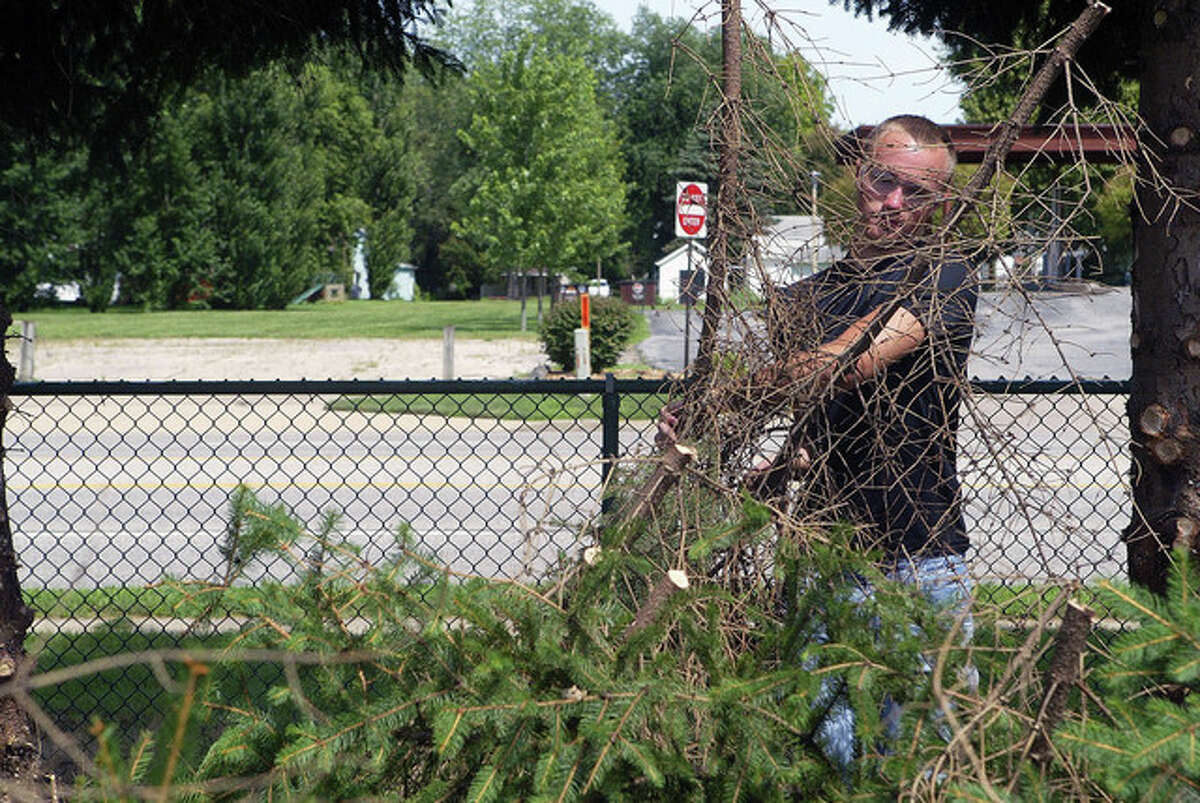 Bradyn Coad, a summer helper with the Jacksonville Parks and Lakes Department, stacks limbs near the soccer fields in Community Park. Parks and lakes employees recently trimmed the evergreens that line a portion of South Main Street.