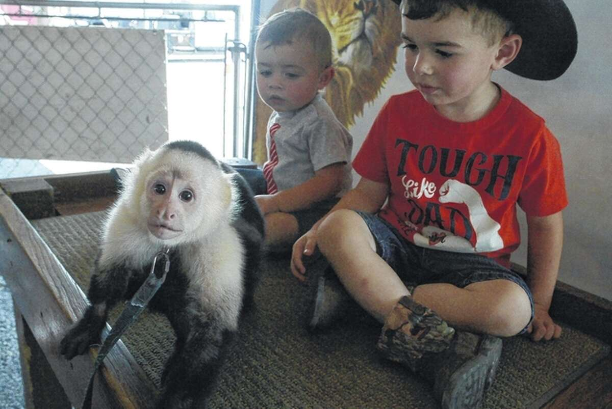 Abu, a capuchin monkey, spots a photographer as brothers Wyatt Peine (left), 1, and Aaron Peine, 2, sons of Kayla and Aaron Peine of Jacksonville, look on Thursday at Jungle Safari. The mobile educational zoo is in Jacksonville through Sunday. This is the third consecutive year Jungle Safari has partnered with Pathway Services to bring the zoo to Jacksonville.