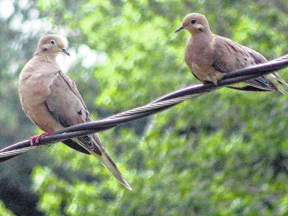 Beverly Watkins | Reader photo Two doves seem to be having a conversation while sitting on a wire in Scottville.