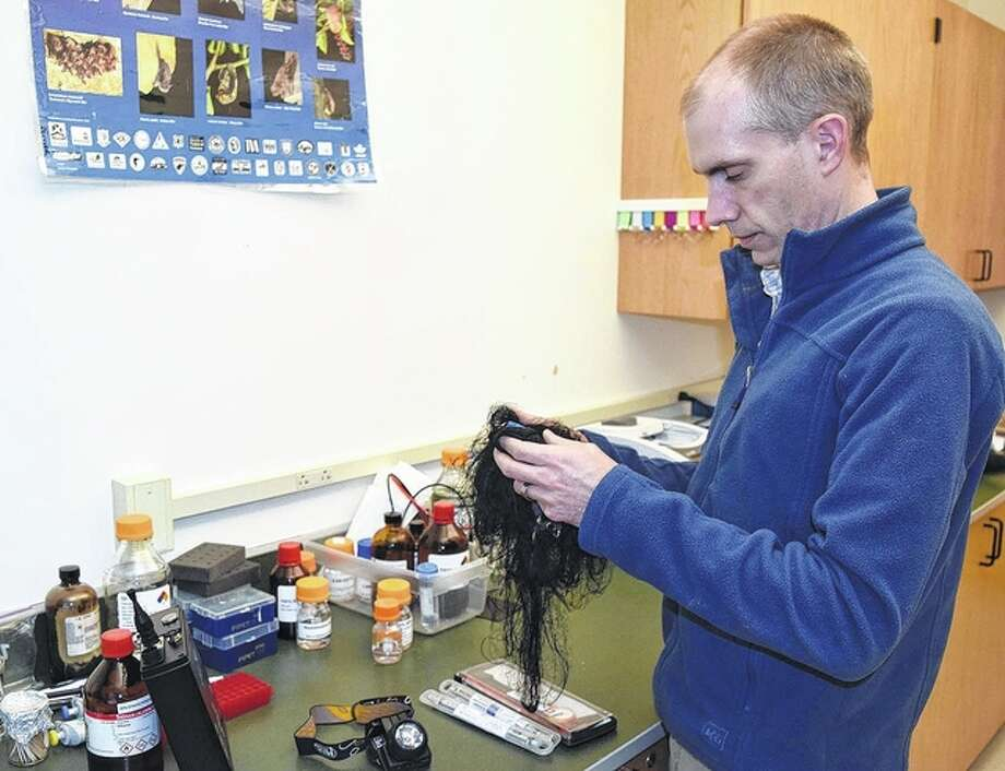 Illinois College assistant professor of biology and bat expert Bryan Arnold checks a mist net he uses to capture bats. Spread out on a laboratory bench in front of him is equipment he uses in bat research. Photo: Greg Olson | Journal-Courier