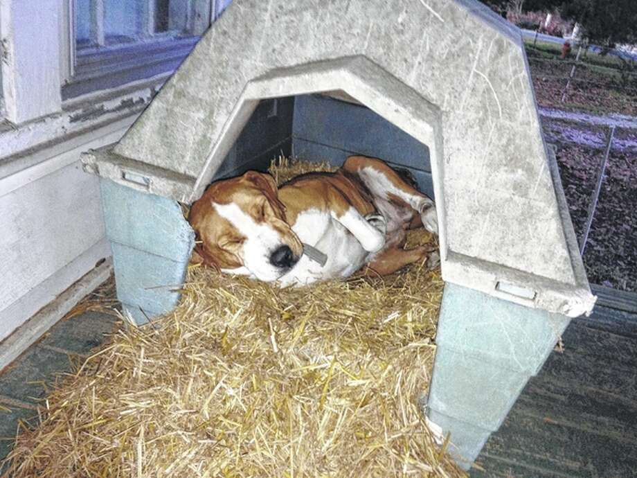 Contributed photo Experts recommend shelters for pets and livestock to shield them from rain and snow, access to non-frozen water and high-quality forage or hay for livestock, which helps the animals generate and maintain body heat.