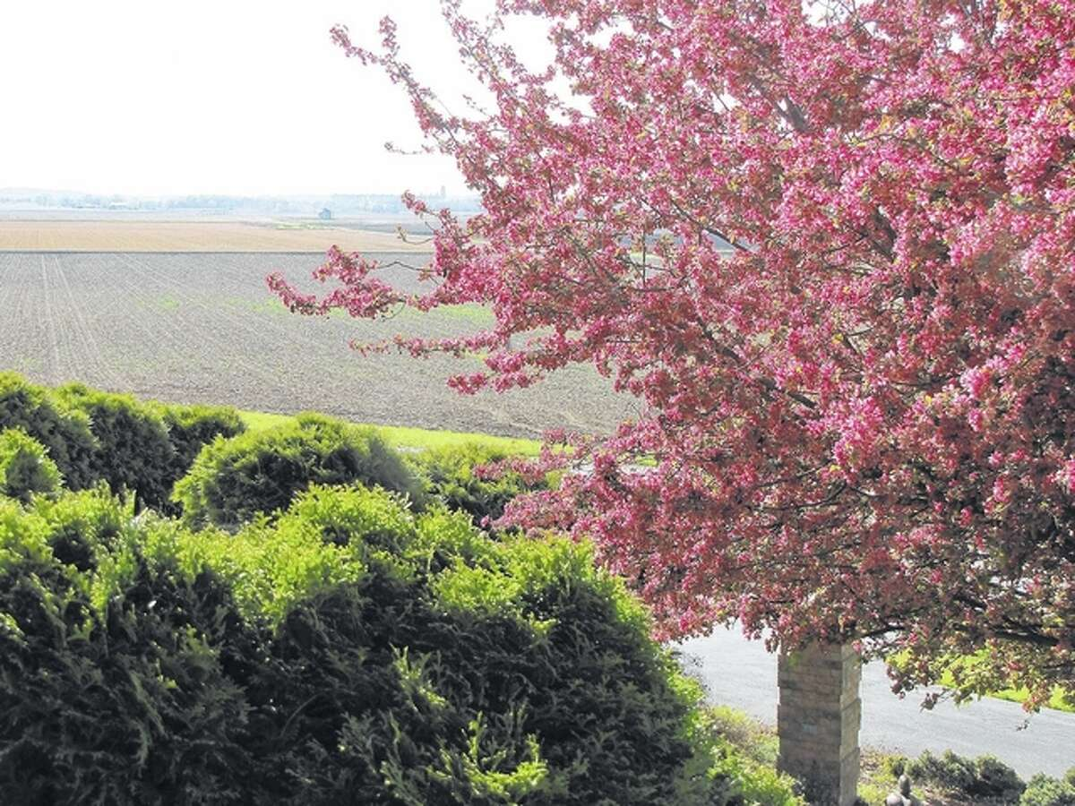 Spring and a flowering crab tree create a picturesque view along the Illinois River bottoms near Bluffs.