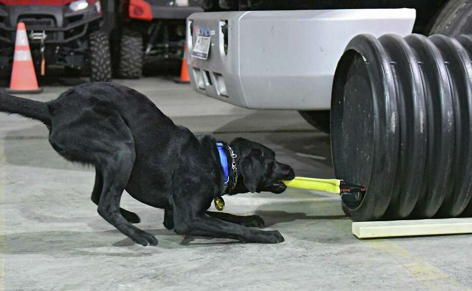New York State Fire K-9 team dog Echo performs a drill at the New York State Division of Homeland Security and Emergency Services' (DHSES) Office of Fire Prevention and Control at the Northeastern Industrial Park on Friday, Feb. 9, 2018 in Guilderland Center, N.Y. DHSES was introducing its newest disaster search K-9 teams to the media. (Lori Van Buren/Times Union) Photo: Lori Van Buren, Albany Times Union / 20042873A