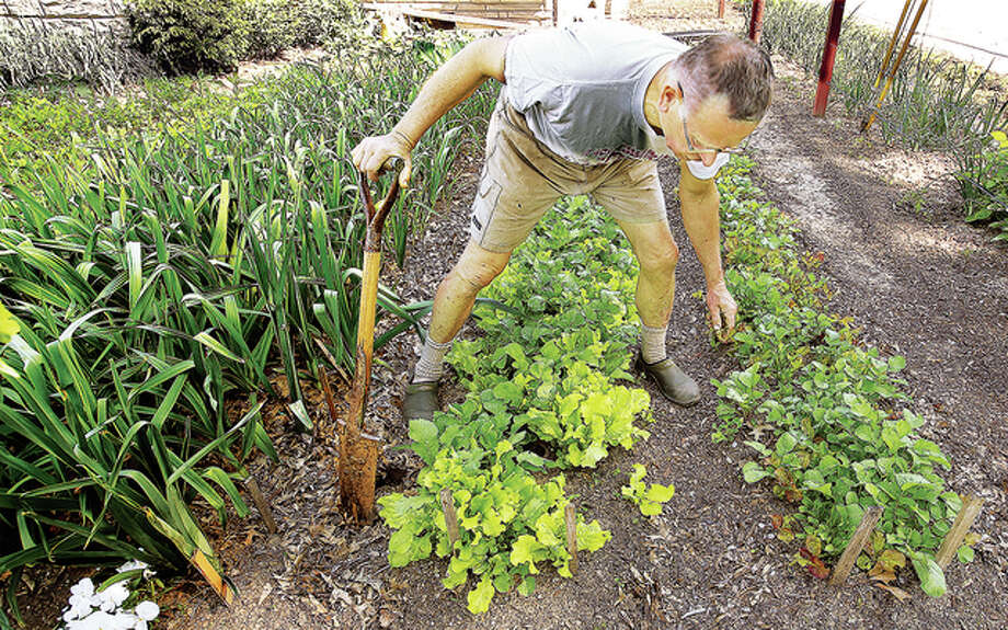 Clifford Clark says he grows his food organically on his small lot in Alton, but can't legally claim it is organic. Photo: John Badman | The (Alton) Telegraph