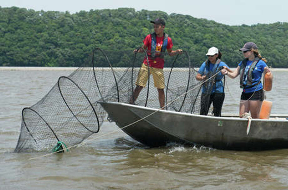 (L-R) Thomas Nguyen, of the University of Houston, Laura Martinez, of the University of Miami, and Julia Breed, of the University of Massachusetts Dartmouth, set a fyke net in the Mississippi River.