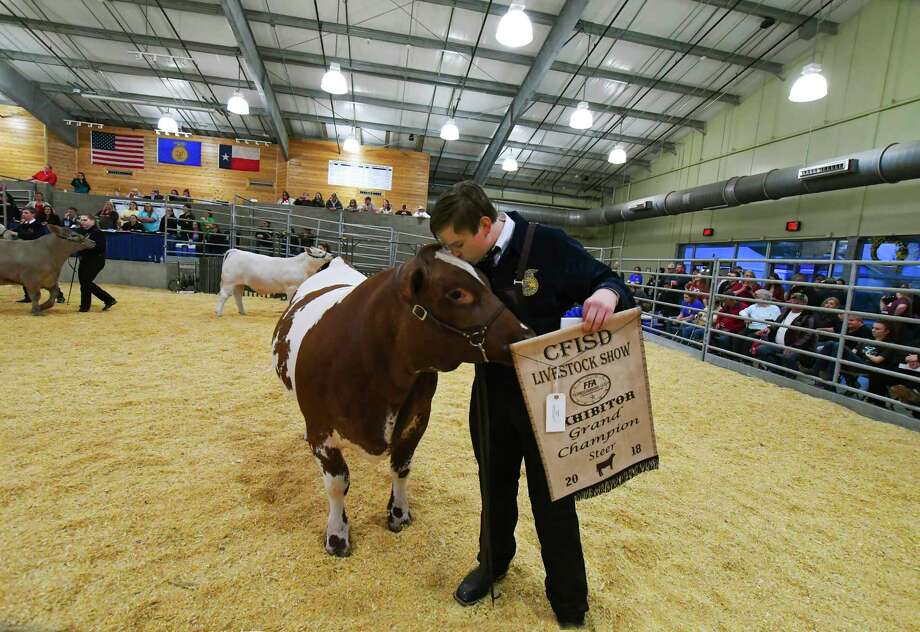 In the steer competition, Byan Rhodes won Grand Champion at the 24th Annual Cypress-Fairbanks ISD Livestock Show and Sale which was held at the district's exhibit center Feb. 8-10. Photo: Tony Gaines/ HCN, Staff / Houston Chronicle