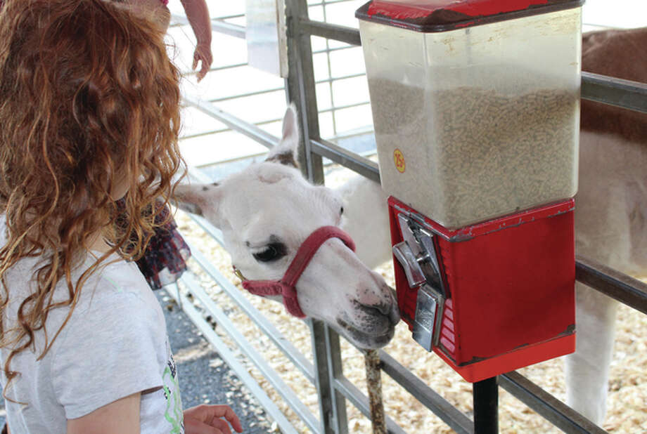 Melissa French, 9, the daughter of Ashley Bell of Mount Sterling, tries to get food out of a vending machine Thursday to feed to a llama, but the llama had other ideas and decided to eat straight out of the machine at the Jungle Safari Mobile Educational Zoo in the parking lot of Pathway Services. The zoo will be open from 10 a.m. to 9 p.m. today and Saturday and 11 a.m. to 5 p.m. on Sunday.