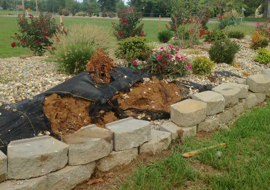 New landscaping at Statehouse Square in Alton awaits repair 3.5 weeks after a car with faulty brakes drove up over the curb, across the grass and into the planter. The landscaping blocks, soil and black weed barrier remain disturbed and a bush has died since the July 30 crash. Linda N. Weller/The Telegraph Photo: Linda N. Weller   The Telegraph