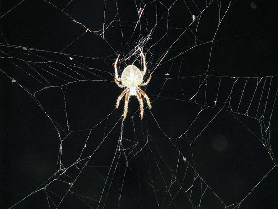 A spider dangles in the center of its web on a clothesline. Photo: Beverly Watkins | Reader Photo