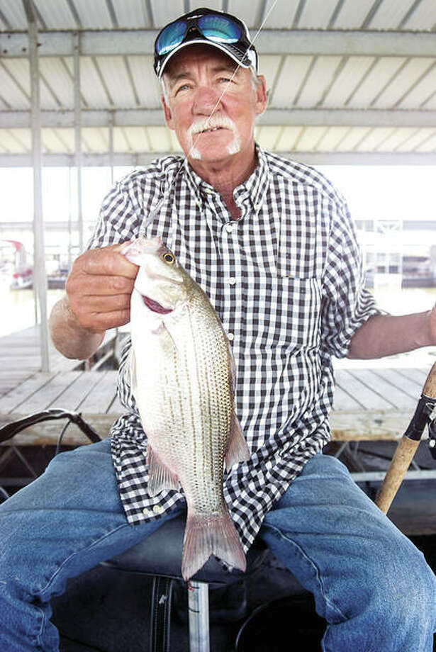 Fall is the best time of year to put together a stringer of really nice white bass. Photo: Curt Hicken | For The Telegraph