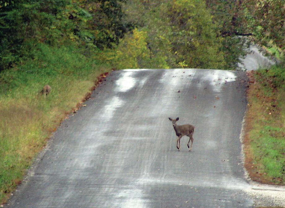 Two deer cross a country road east of White Hall. They grazed along the side of the road before working their way into the woods. Photo: Beverly Watkins | Reader Photo