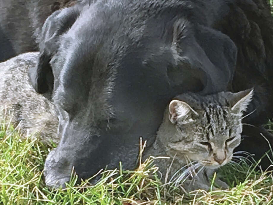 A dog and cat share space while enjoying the warm weather. Photo: Joy Harris | Reader Photo