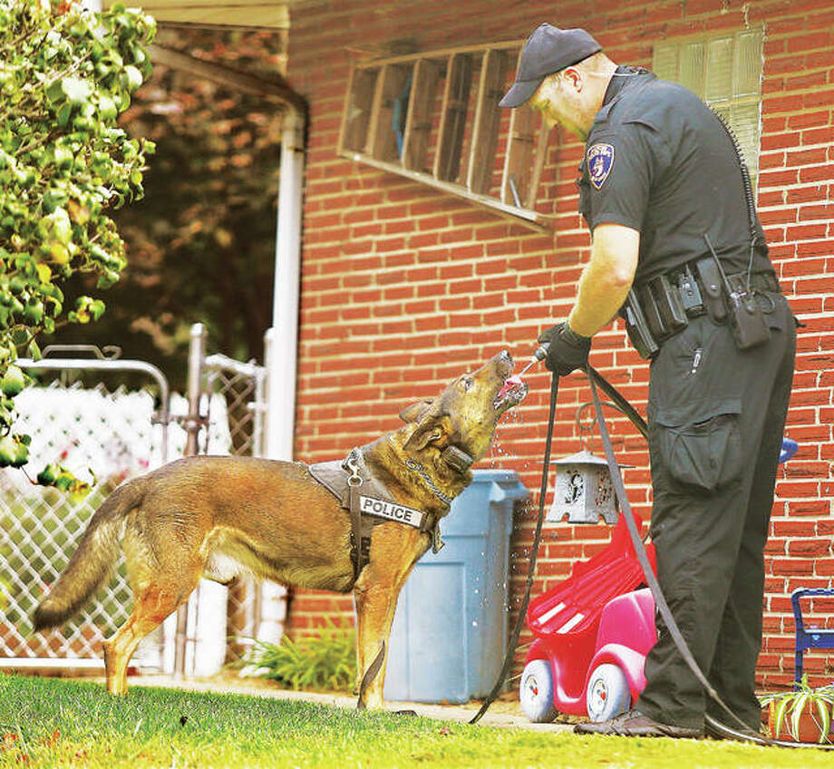 Alton Police canine officer Brian Brenner stops after one of two tracks to give his partner, Kenzo, a drink from a garden hose, with the homeowner's permission, on Hy Vista Drive Monday. Brenner and other officers were tracking a home invasion suspect who was beated with a baseball bat by the female resident before he climbed back out a second story window of a house in the 3500 block of Meridocia Street. A 29-year-old Wood River man was arrested a few blocks away after a second track by the canine team. Photo: John Badman|The Telegraph