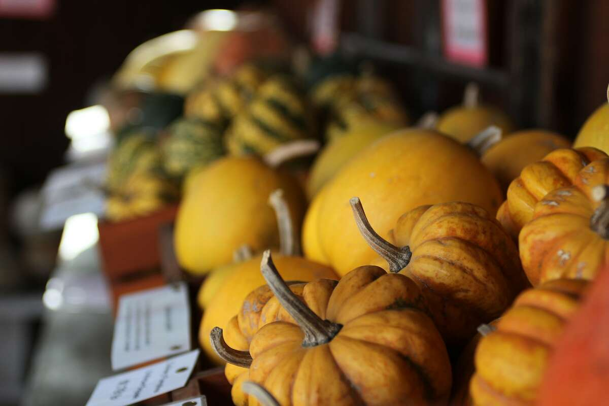 Jack Creek Farms Country Store on Highway 46 in near Paso Robles offers a wide variety of squash, cheeses and other foods for snacking or picnics.
